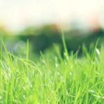 外構を綺麗に保つには、春になる前に草を抜くこと!